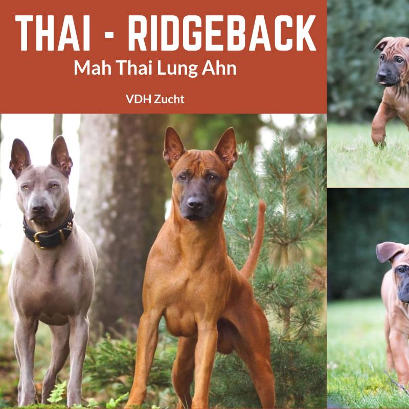 Thai Ridgeback